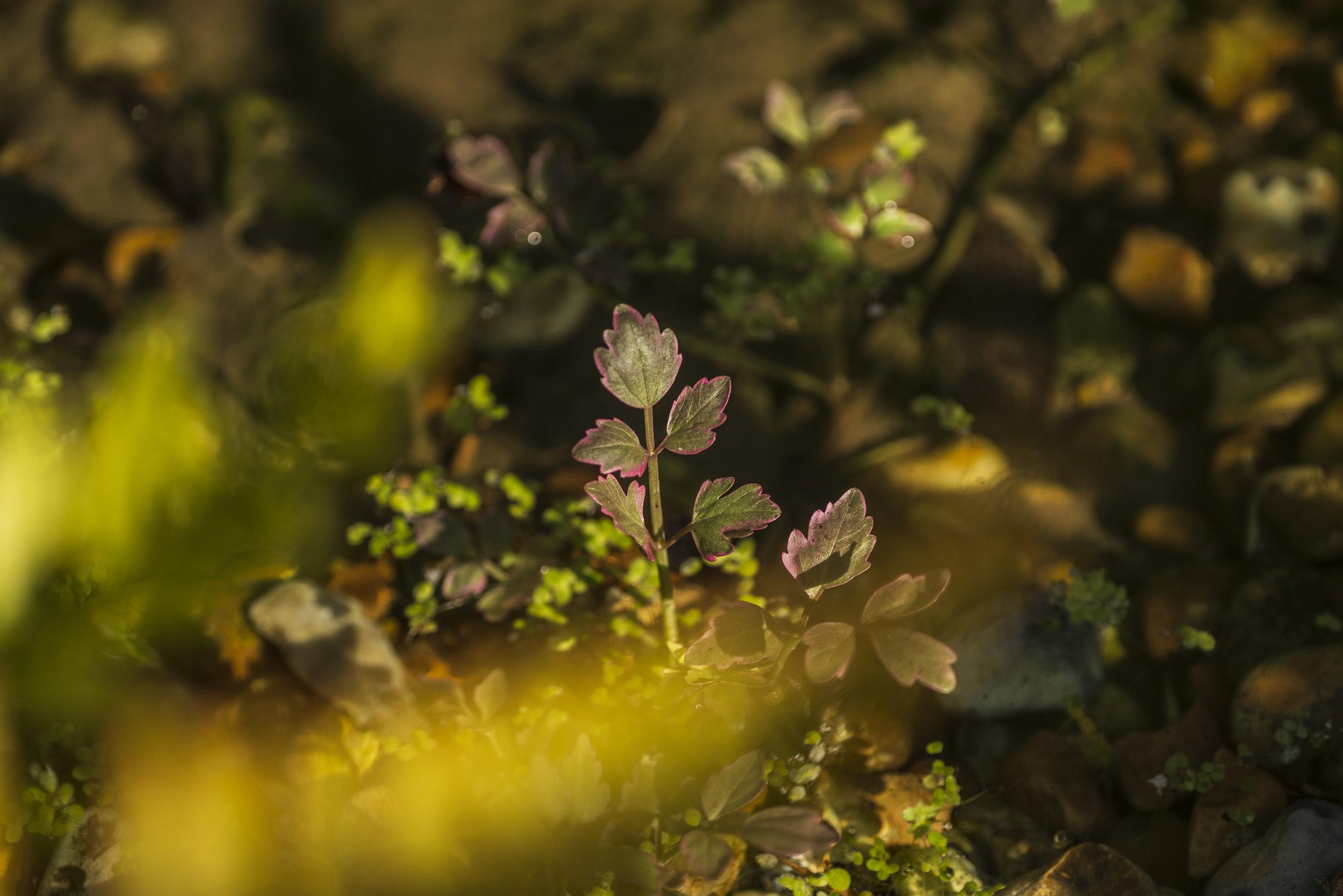 pond_plantings.jpg