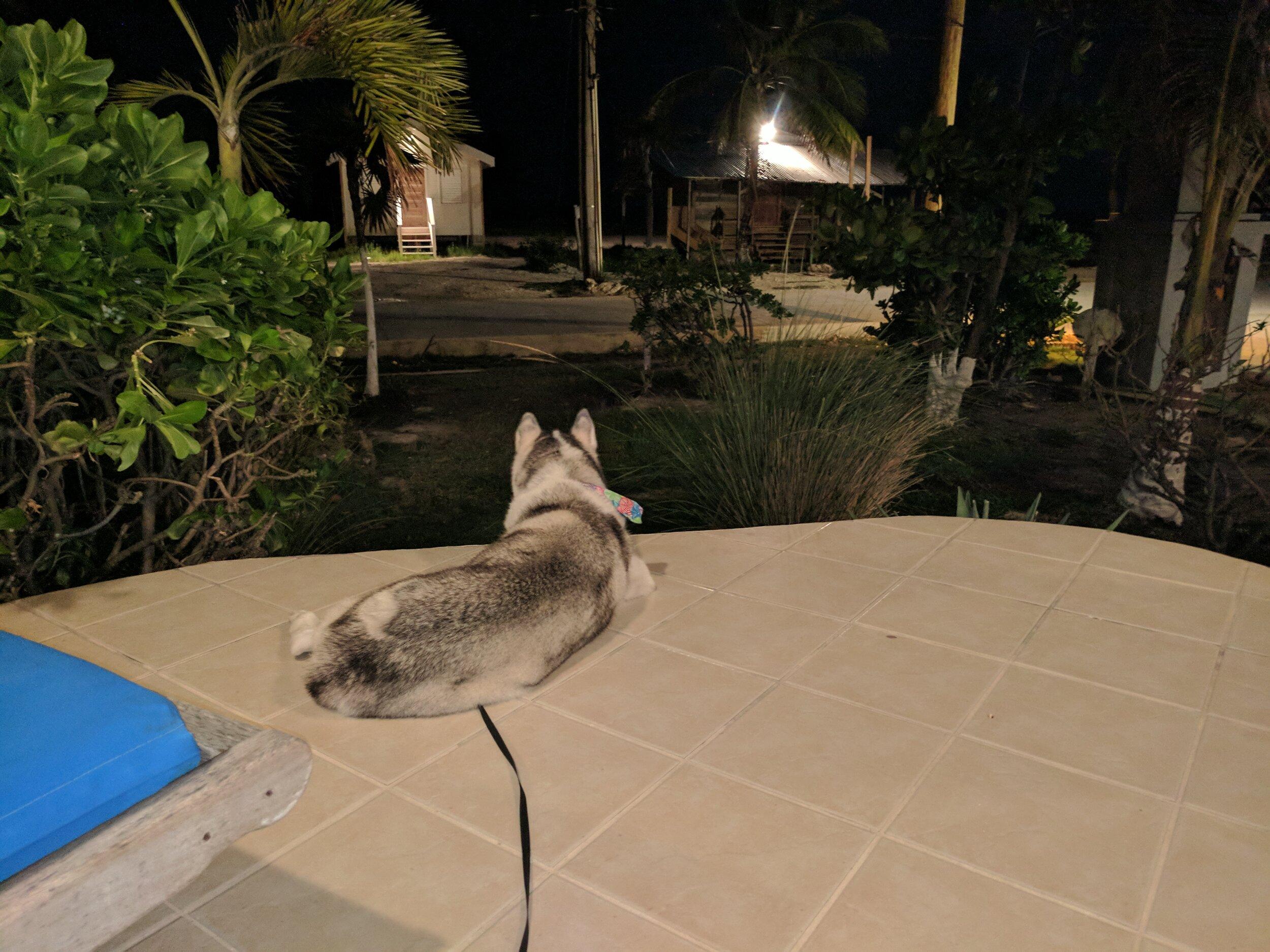 Shay watching sunrise-North of the Bridge