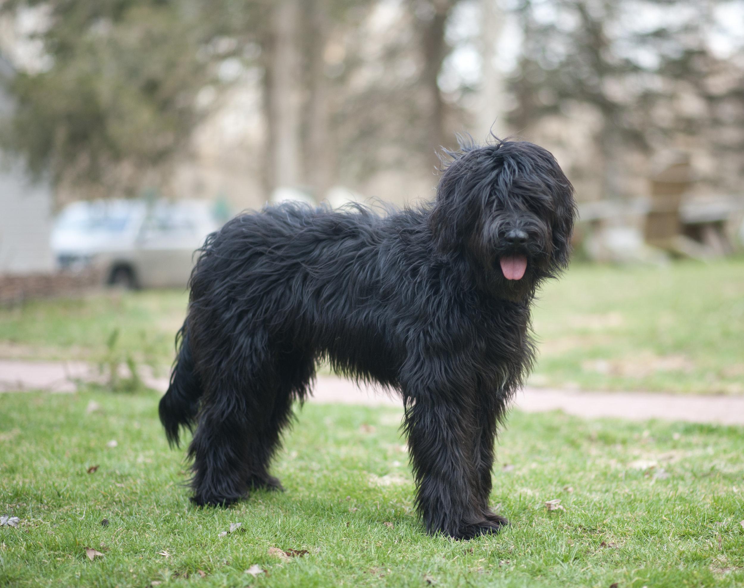 Black - 7 month old puppy