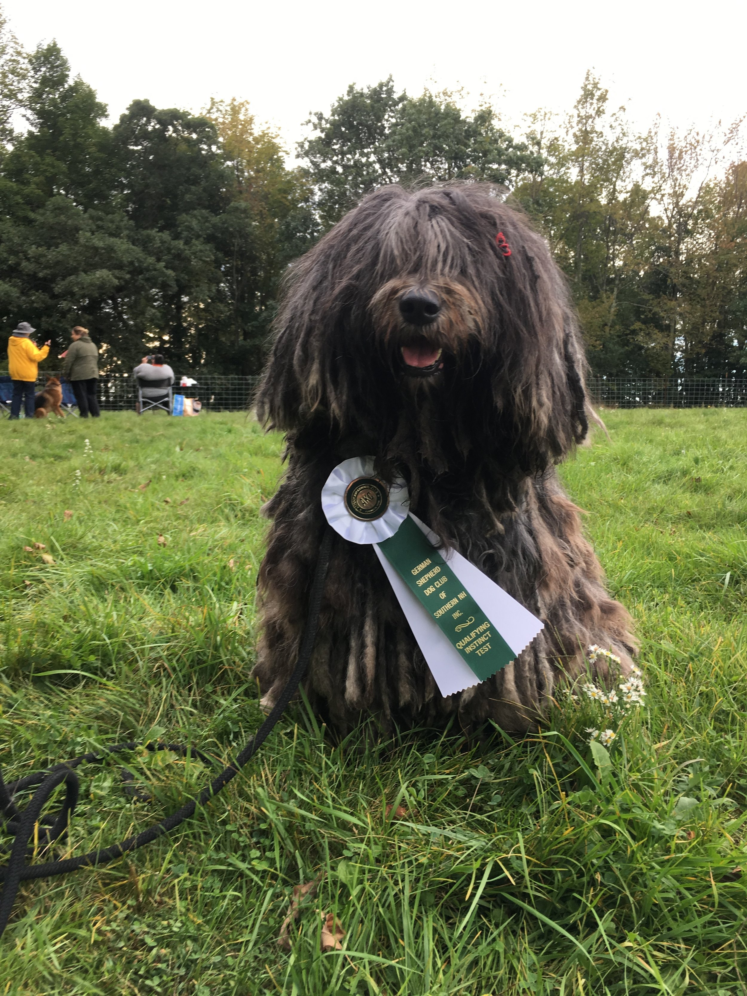 The Bergamasco is versatile - There are so many ways to have fun with your Bergamasco and they are always happy as long as they are with you.