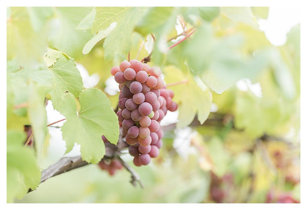 Daniel's Vineyard Wedding_0210.jpg