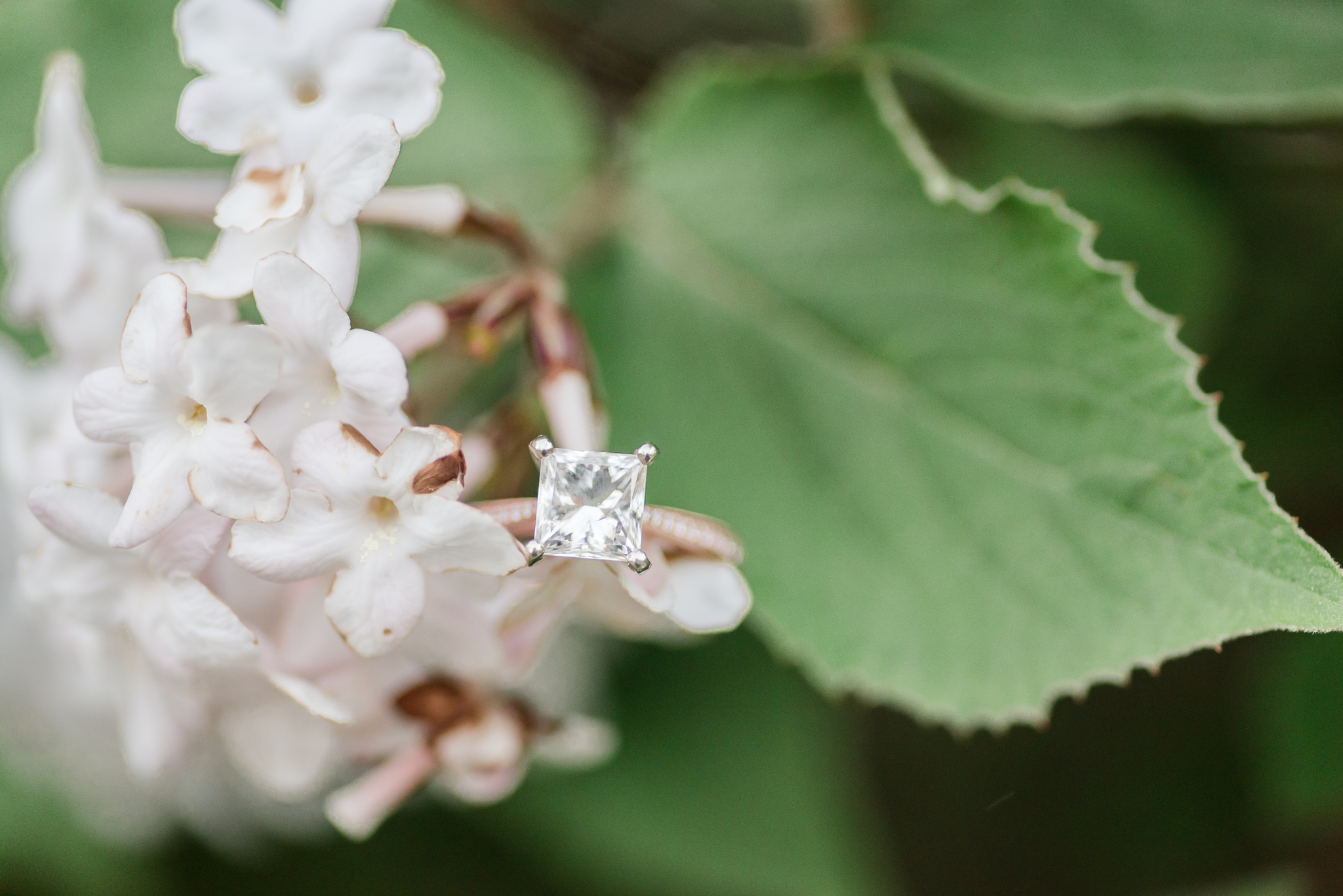 Richie Woods Nature Preserve and Mustard Seed Gardens Engagement Session Wedding Photos-59.jpg