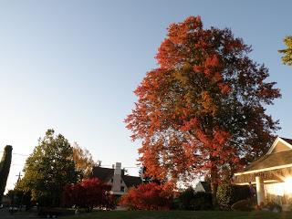 fall-2008-007.jpg