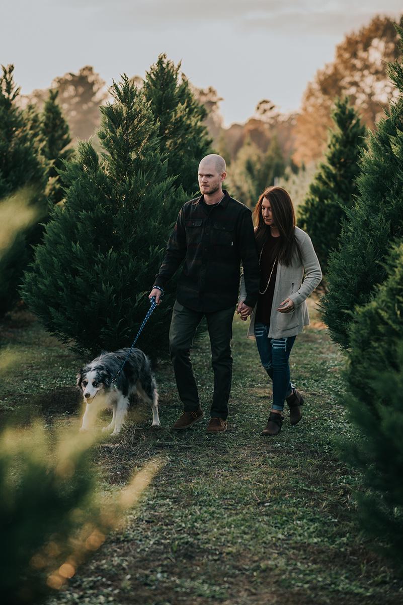 Calder_Leighton_Thomleys_Christmas_Tree_Farm-5.jpg