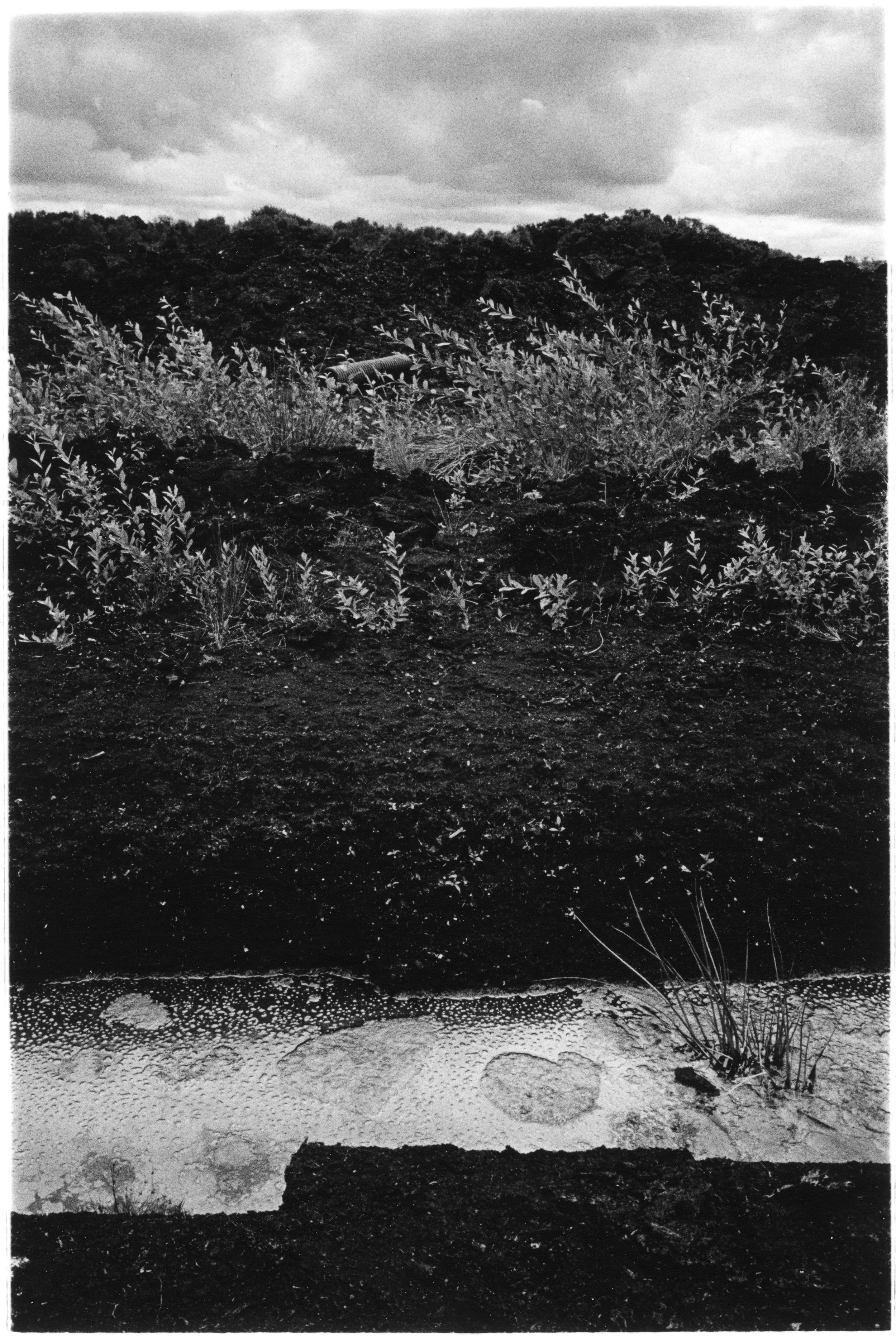 Lindow Moss, Cheshire