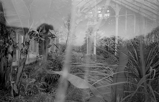Glasshouse 007-2.jpg