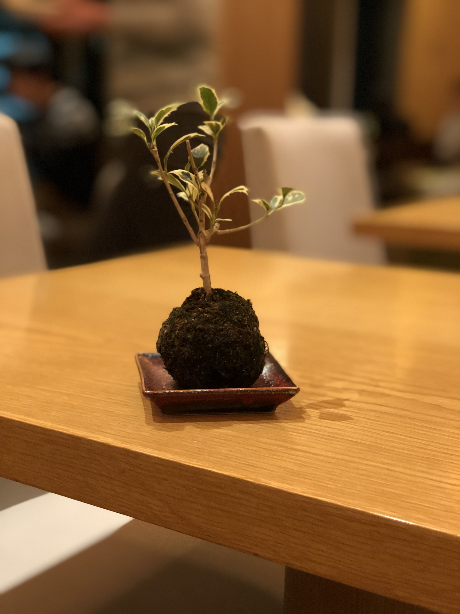 I loved these cute little trees in the exec lounge