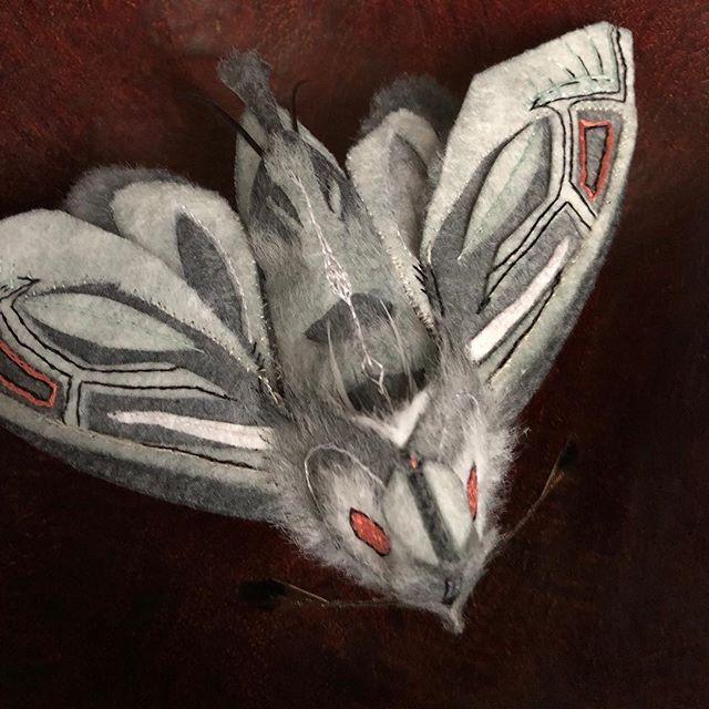 Moth #6, 2019