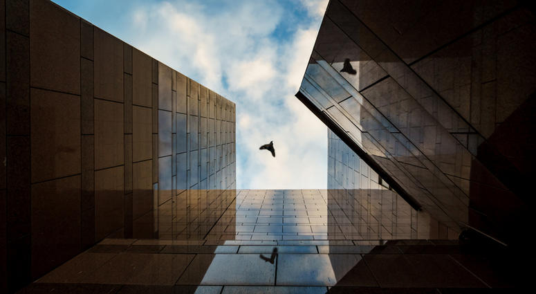 Sweet Home Chicago - The City of Big Shoulders can solve the problem of bird collisions and mortality by amending the building code to require Bird-Friendly Design on non-residential and high-rise buildings.