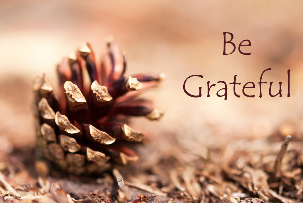 Pine-cone-grateful.jpg