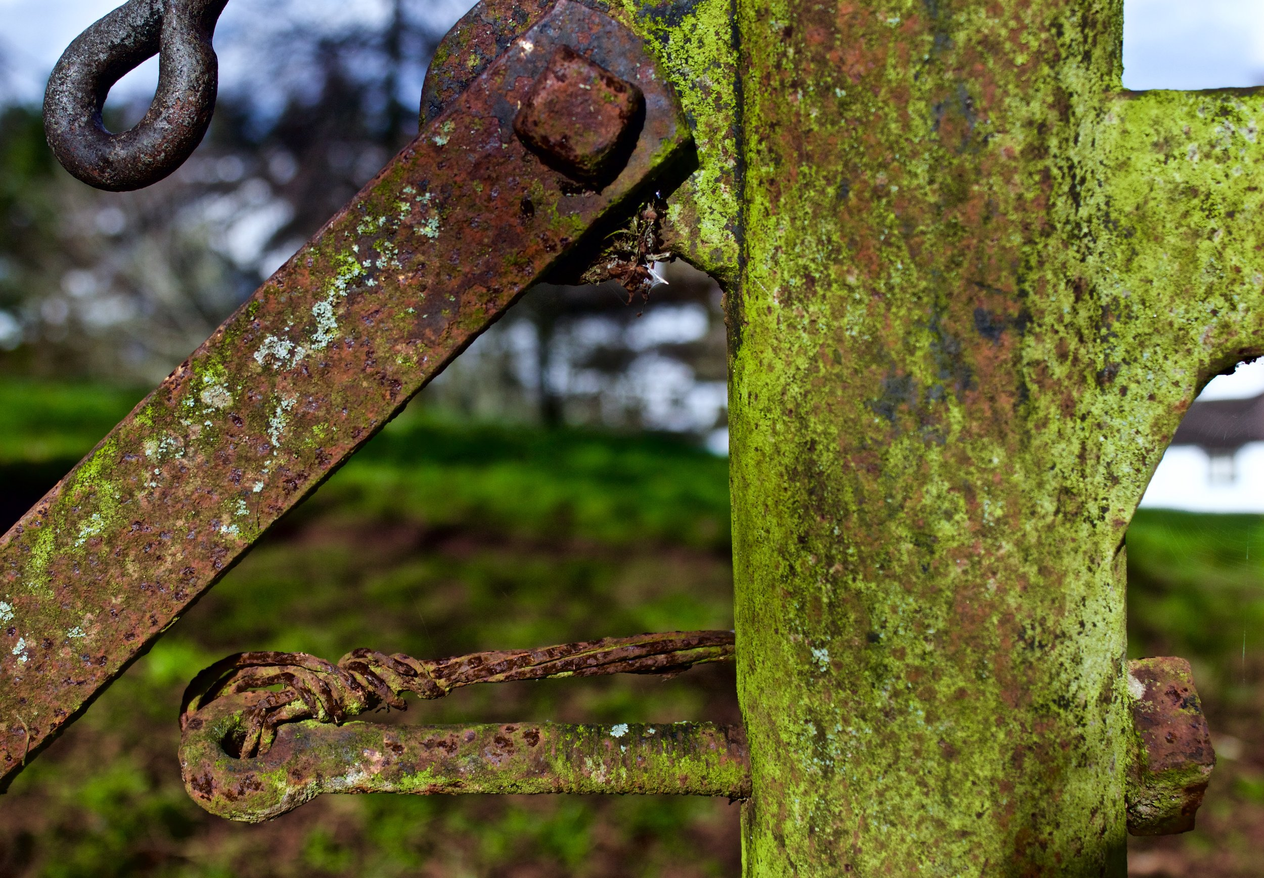 rust 8 ( Dawlish, England horizontal).jpg