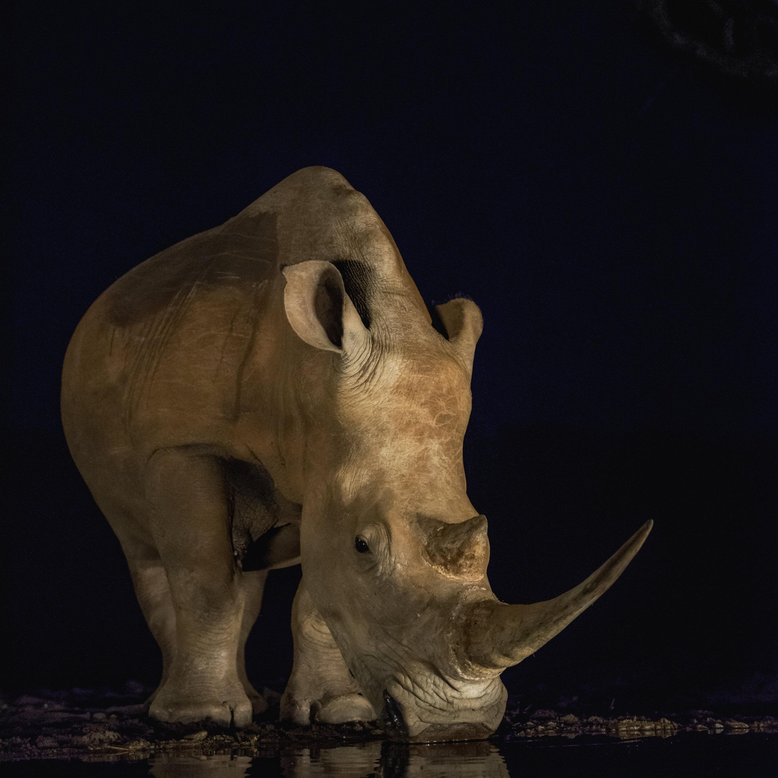 Rhino Blog.jpg