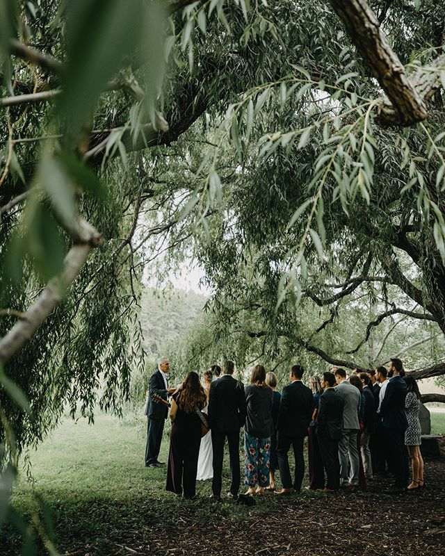 A wedding in the willow tree. Sounds like a great book.