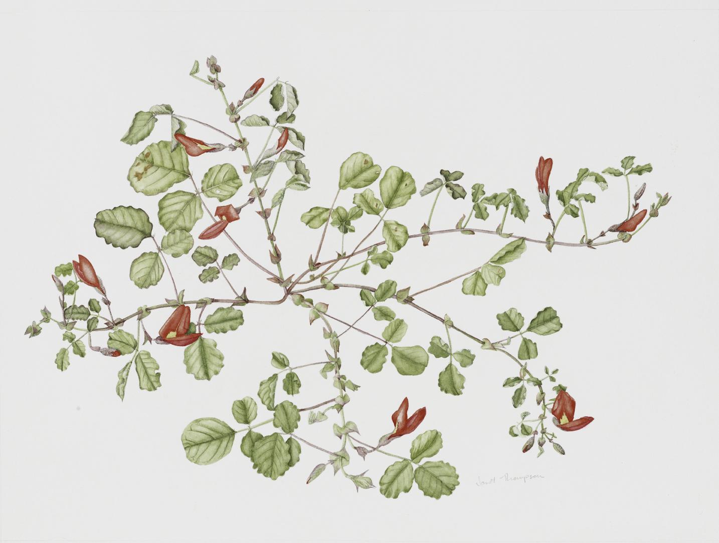 Botaniko 2.jpg