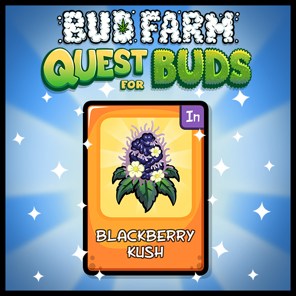 cards_reveal_blackberrykush.png
