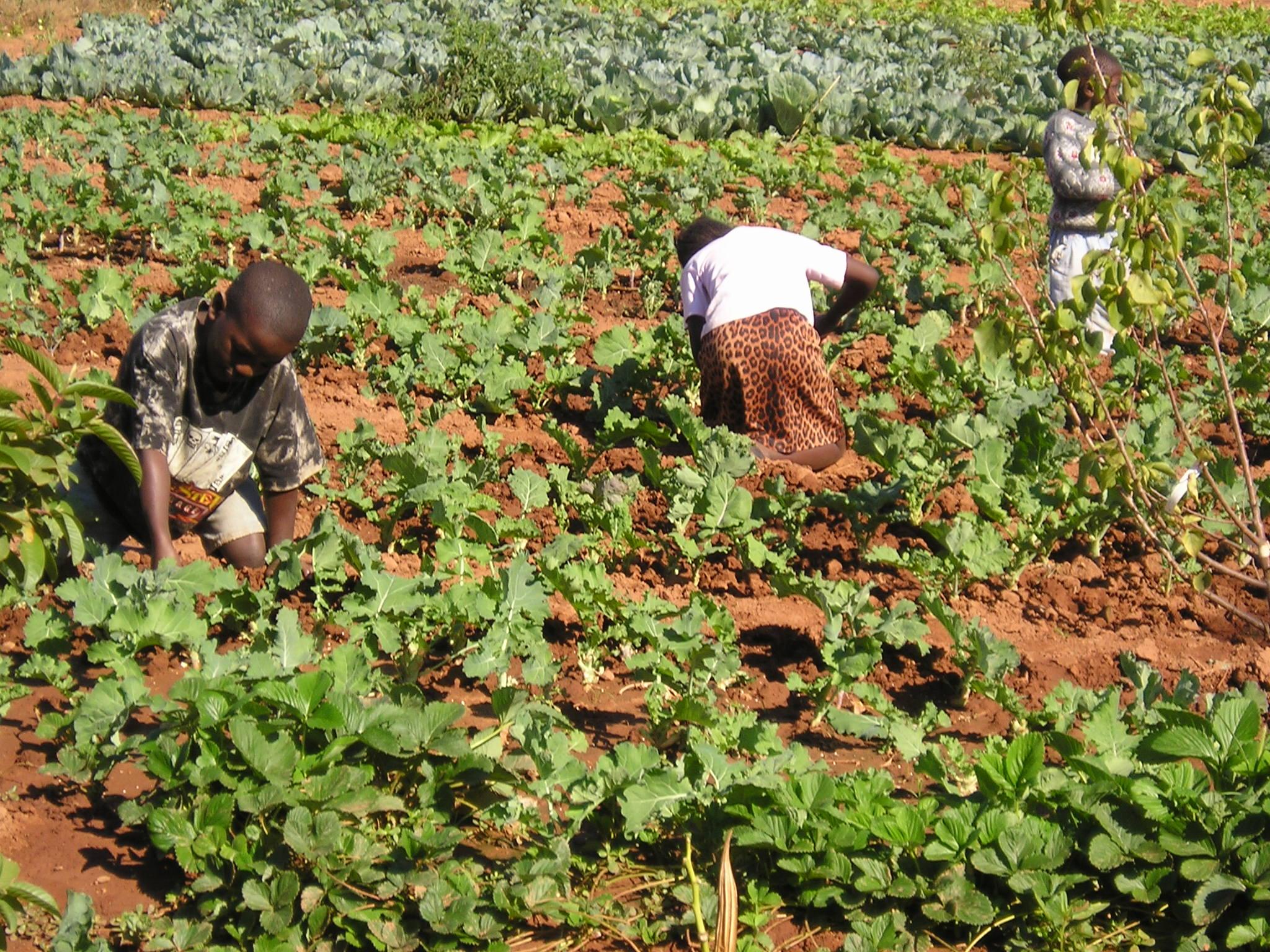 Future gardeners.JPG
