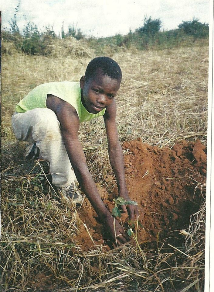 Steven, planting a mango tree