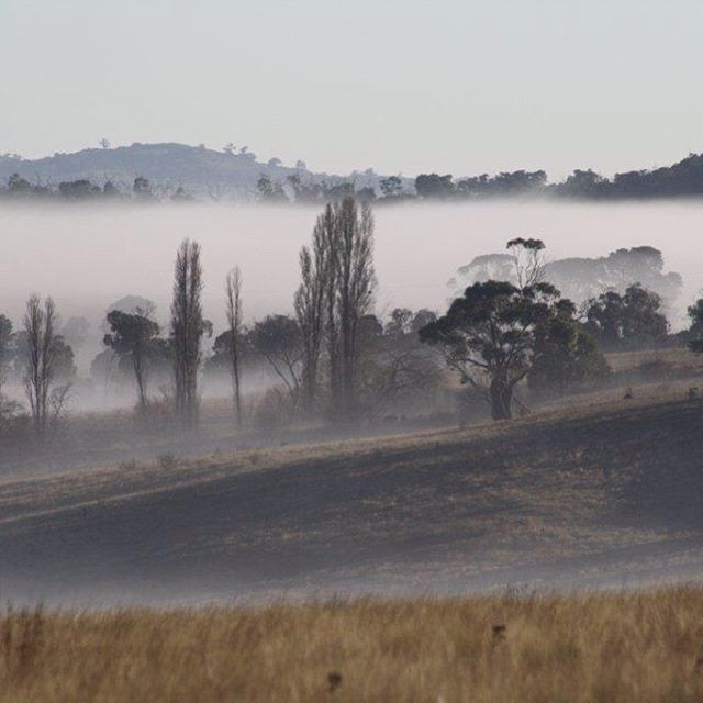 Misty morning. Drummond. #landscape #drummond #cold #environment #centralvictoria #morning #nature #photography