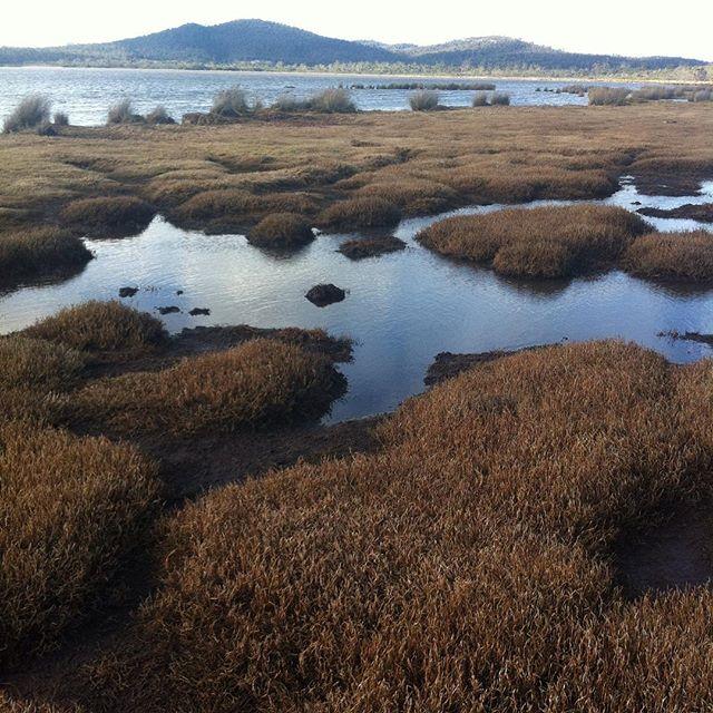 Moulting lagoon. Swan river estuary. Freycinet peninsula. Tasmania. RAMSAR listed wetland on the Freycinet Peninsula. #tasmania #birds #camping #environment #landscape #estuary #moultinglagoon #freycinet #photography #ramsar #wetlands