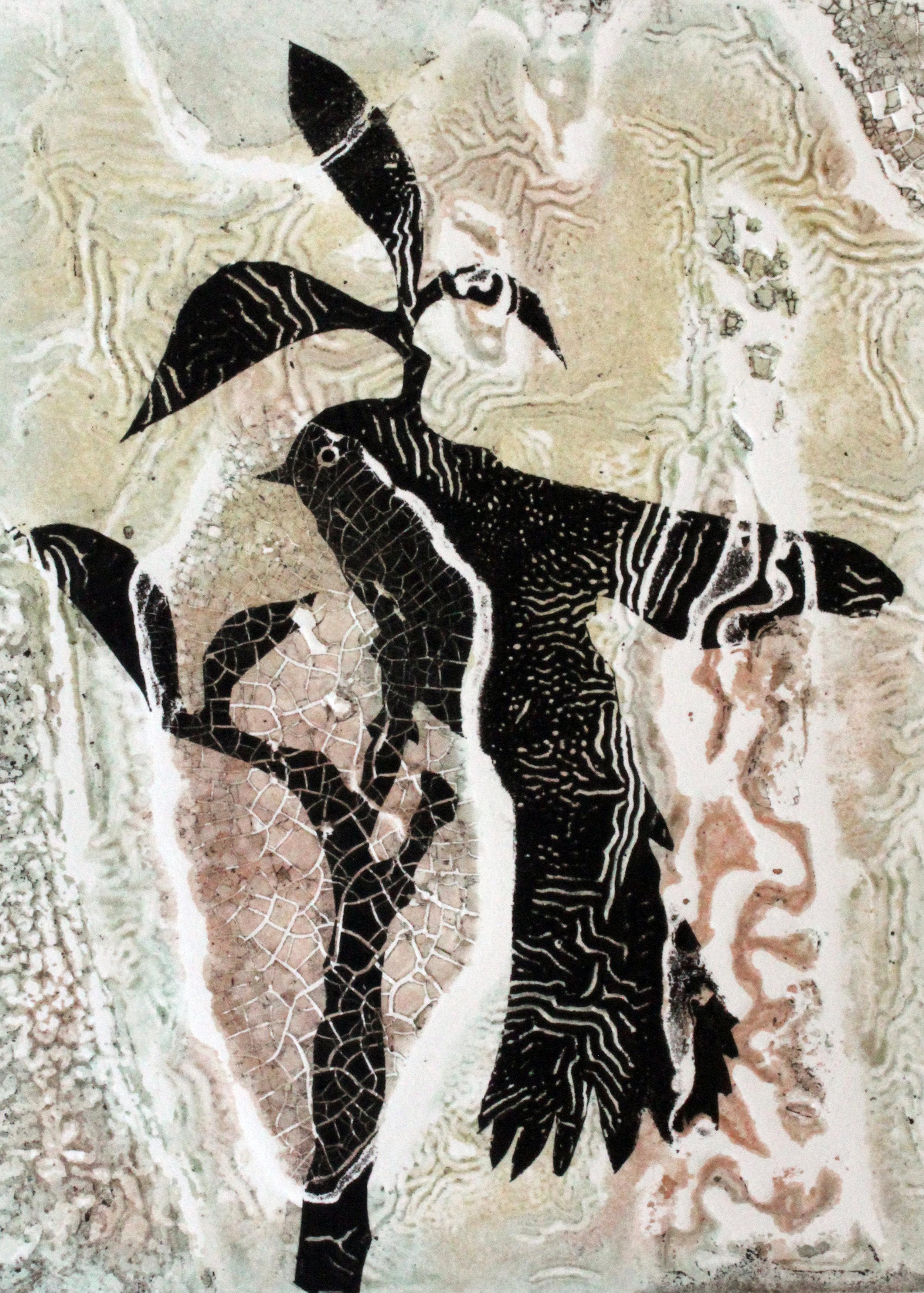 'Grey Fantail. Drummond'