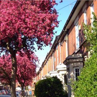 Statham Street's Trees