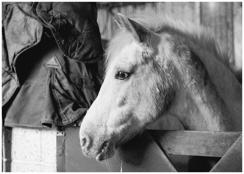 lifestyle-animal-horse-portrait_0004-1024x734.jpg