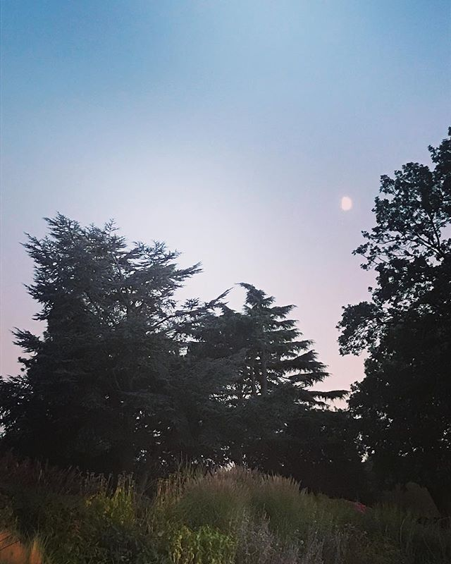 That in between time 〰️ 〰️ 〰️ #halfmoon #dusk #autumnequinox #equanimity #balance #somewhereinthemiddle #thelight#before#magichour#neverceasestomake#myheart#flutter