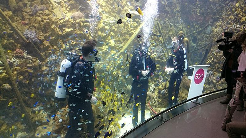 Detail van de glaswand van het aquarium.