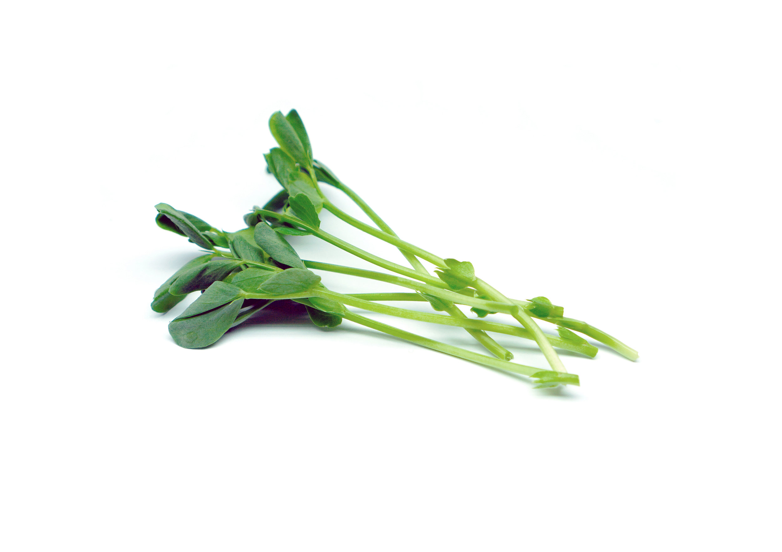 Pea shoots are a popular crop as they can be eaten fresh or cooked. Great with kids as they tend to be slightly sweet. Their tender leaves make a wonderful addition to salads and they are a great addition to soups and stir fries, maintaining much of their firm texture once cooked or sautéed. Very high in vitamin A, C, and folic acid (B9).