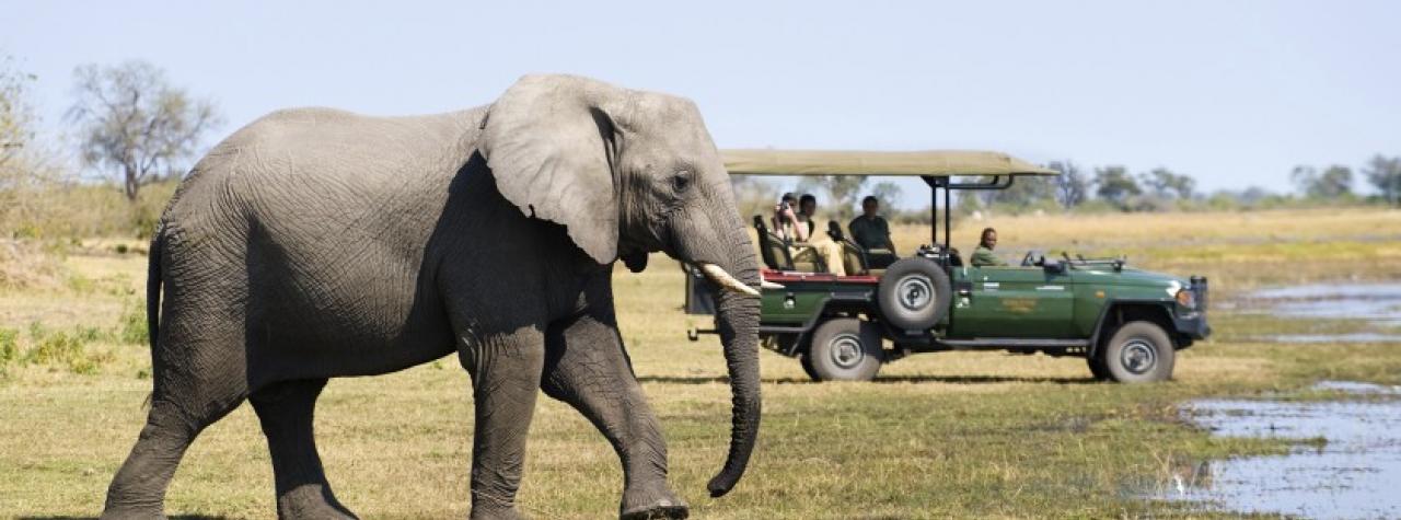 game-drive-zarafa-zibadianja-camp-selinda-game-reserve-botswana-25.jpg