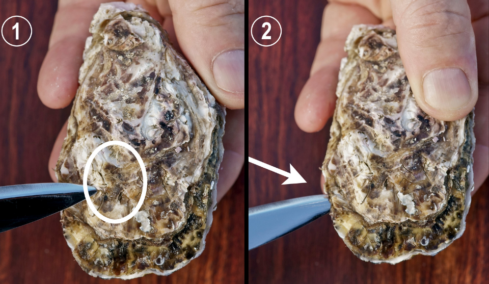 Sanctuary Oysters Blog Image.png