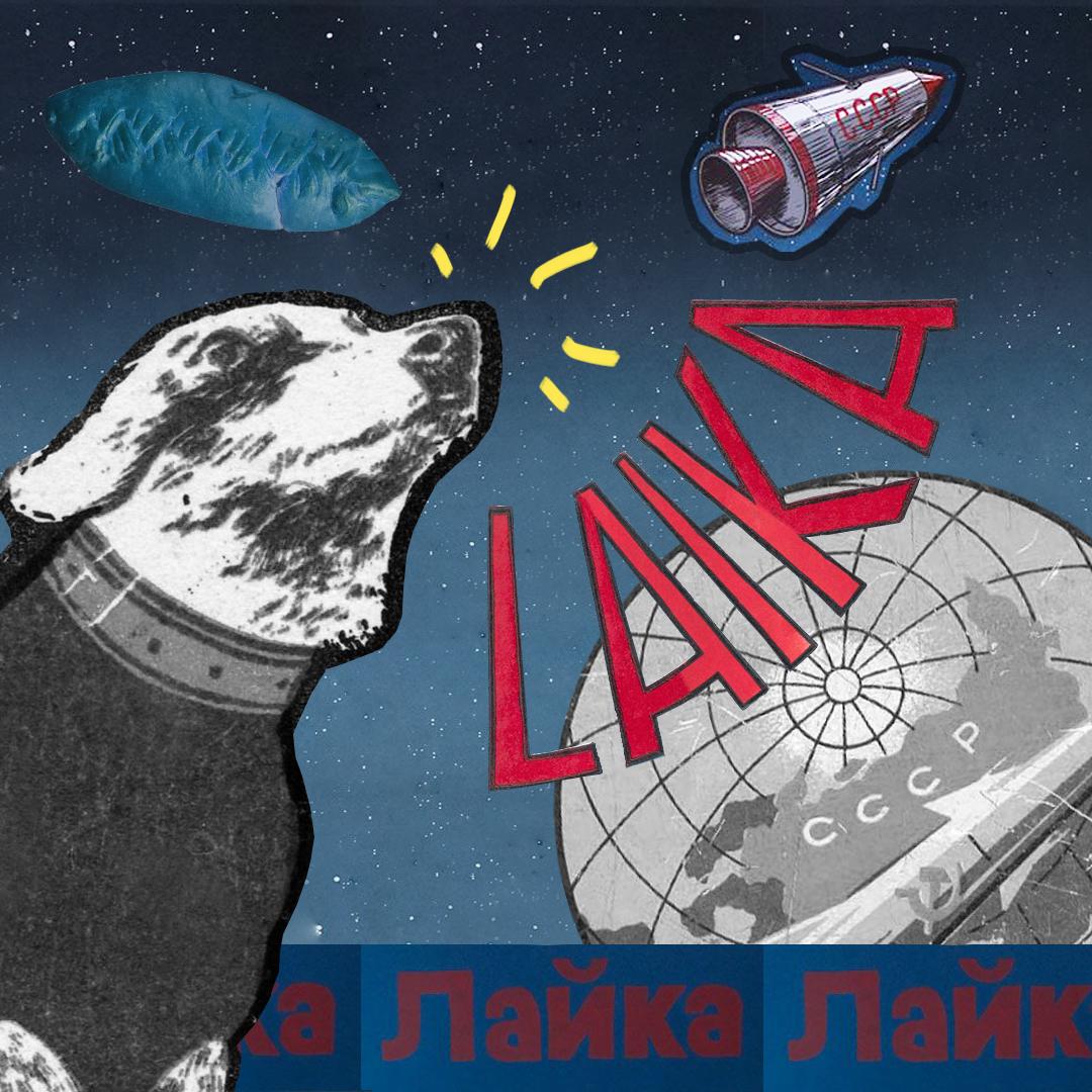 Лайка - En 1957, une petite chienne errante du nom de Laïka est devenue le premier explorateur orbital au monde. Son voyage historique fut une étape majeure de la conquête spatiale. Laïka est devenue un symbole international de triomphe sur des obstacles qu'on pensait impossibles à franchir. Mais derrière les images d'héroïsme demeure une sombre vérité et un dilemme moral quant au prix de l'avancée scientifique. Là où les astronautes soviétiques et américains pouvaient consentir à risquer leur vie, Laika n'était pas en mesure de faire de même. Elle est morte sans savoir où elle était, pourquoi elle était en apesanteur ou si elle reviendrait un jour à la maison.Voici son histoire: