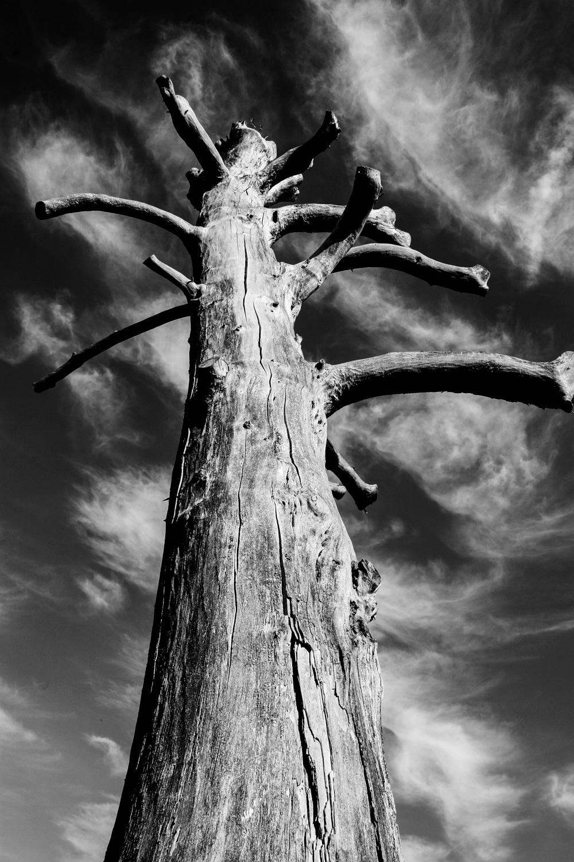0037 Tree.jpg