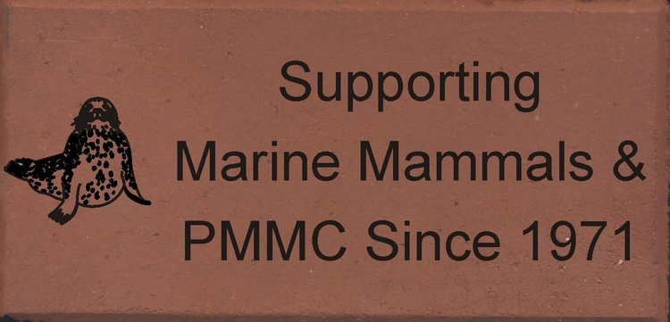 Pac+MMC+Mock+Up+1.jpg