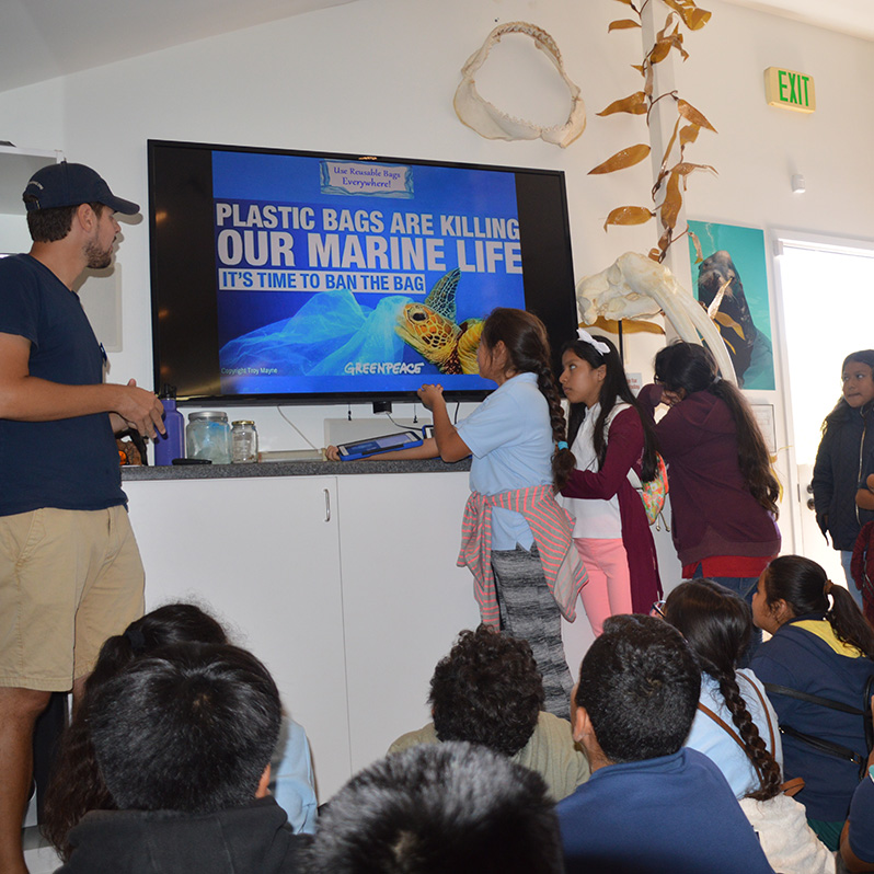 For the Classroom - Our educational programs are a key component to increasing awareness of the issues facing marine mammals and the environment in which they live, and developing a sense of stewardship for those resources.