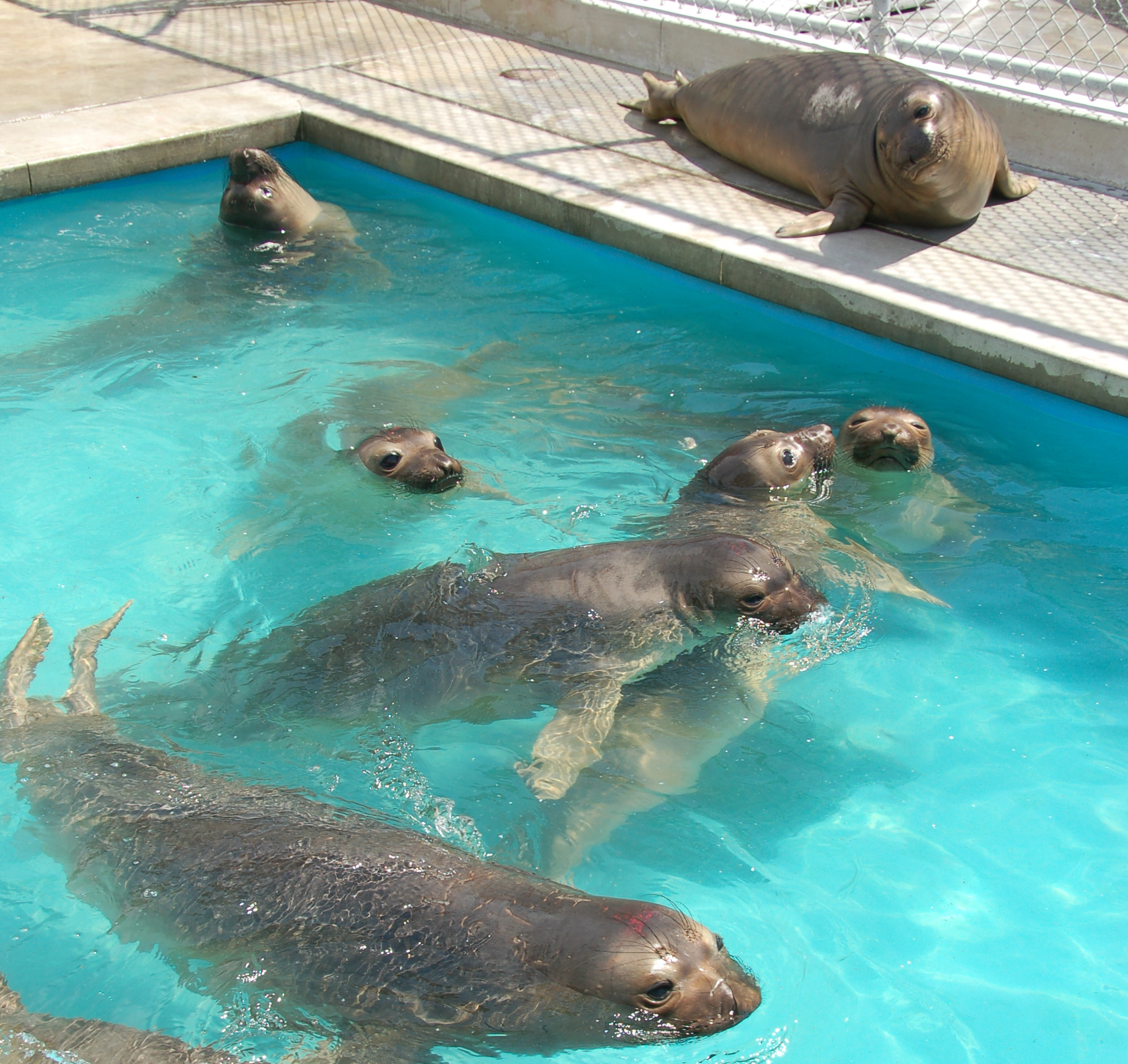 bunch of ellies in pool.jpg