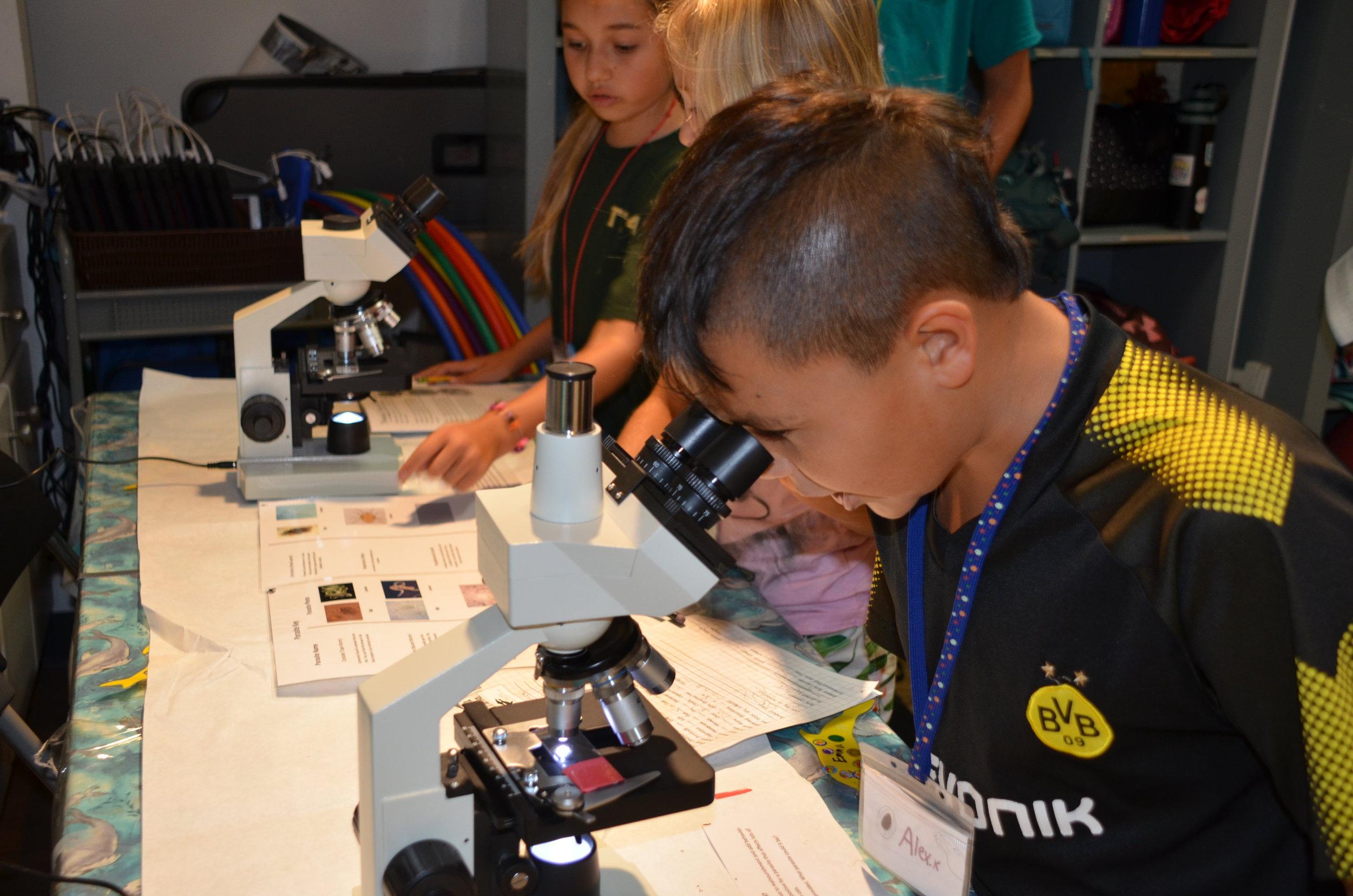 Camp Pinniped Microscopes 7-23-19 011.JPG