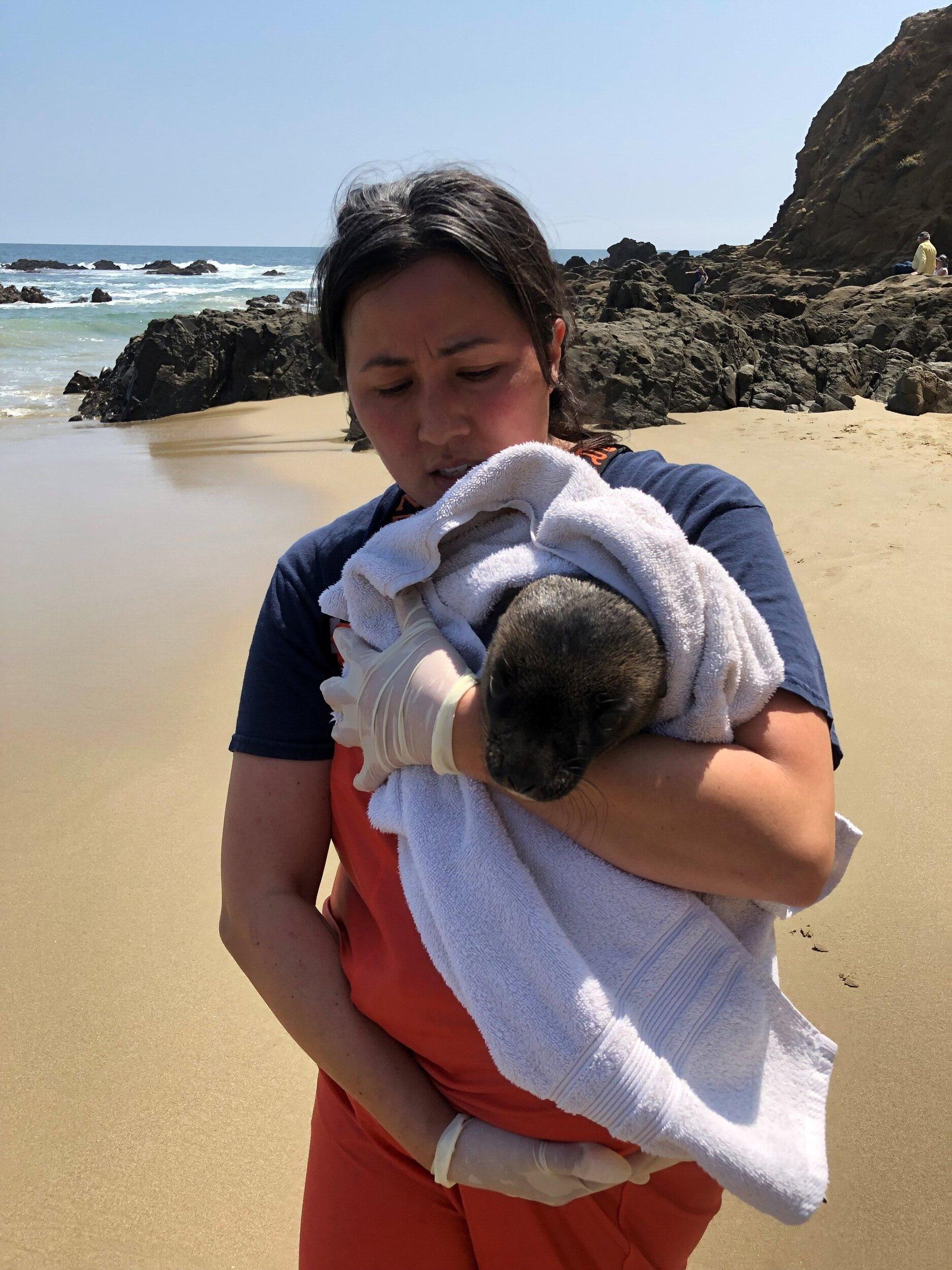Krysta rescuing a newborn sea lion at Cresent Bay.