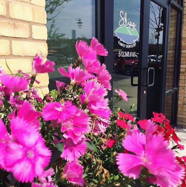 Nothing but flowers and smiles today 🌺🌷Book an appointment with @shippfamilydentistry to refresh and brighten your smile 😄🦷 #HappyMonday . . . #oaksatlakeway @oaksatlakeway #lakeway #laketravis #beecave #lakewaytexas #atx #austintx #keepaustinweird #austin #lakewayday #ShippFamilyDentistry #dentist #dental #teeth #clean #white #dentistry #tooth #dentalhygiene #fresh #365thingsaustin #texas #austintexas #whiteteeth #cleanteeth #happyteeth #happyweek #summer #atxlife
