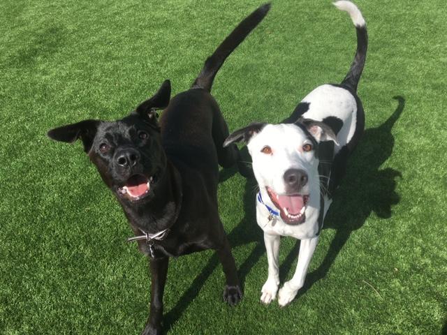 Doggy Daycare -