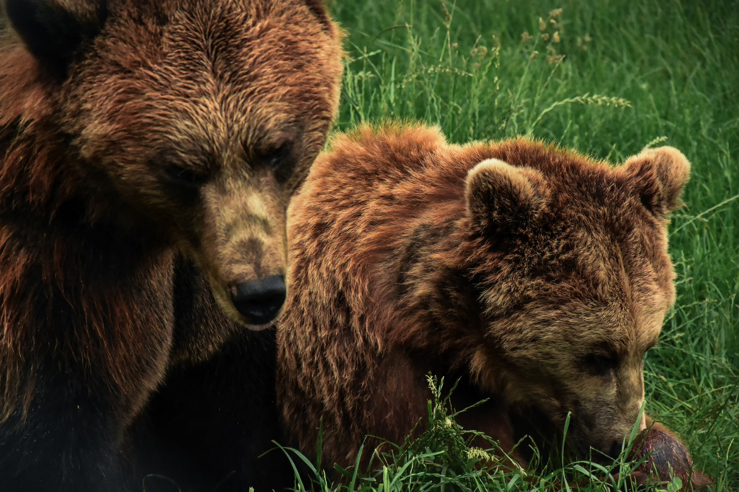 Once a Mama Bear, always a Mama Bear…it's the heart of my DNA.
