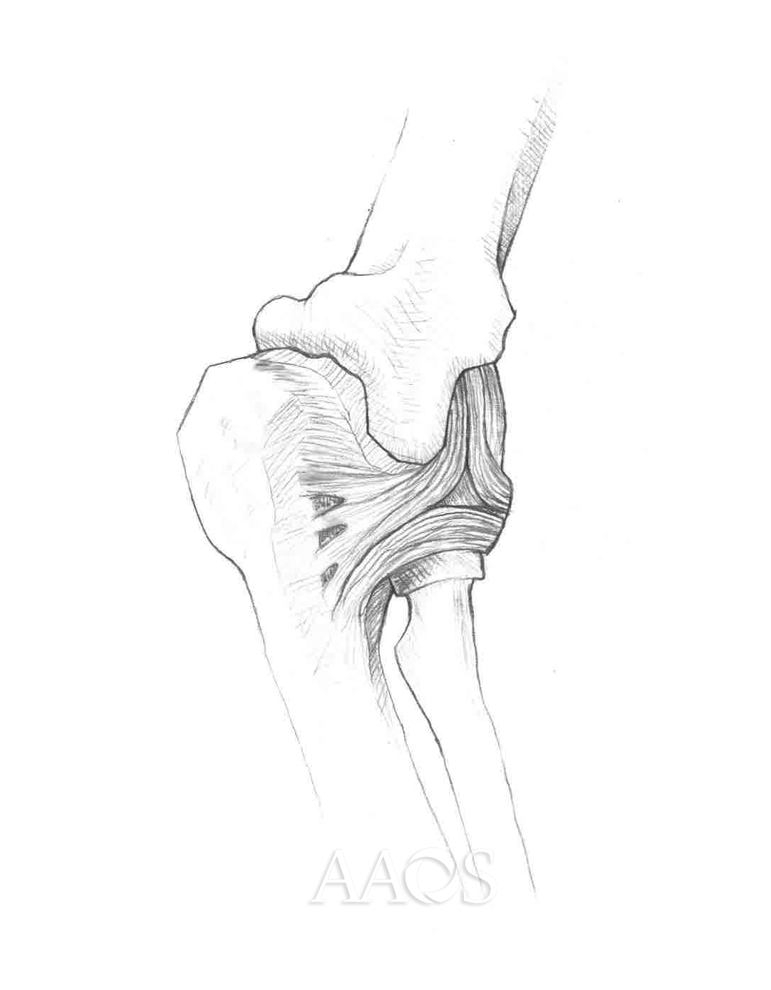 Medial Elbow Joint
