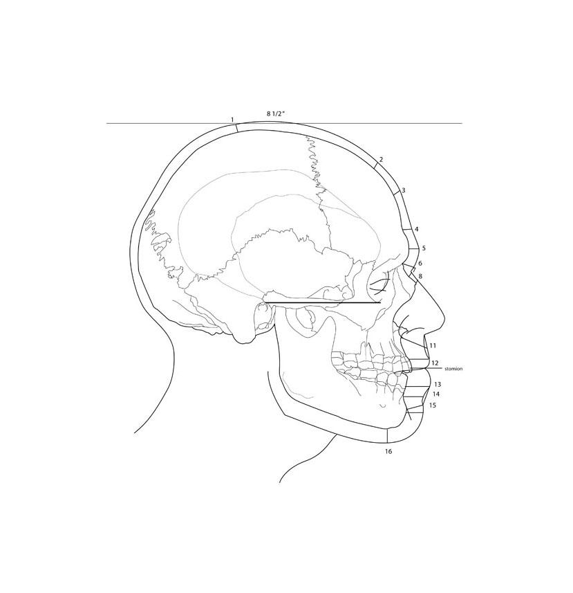 Facial Reconstruction Calculations