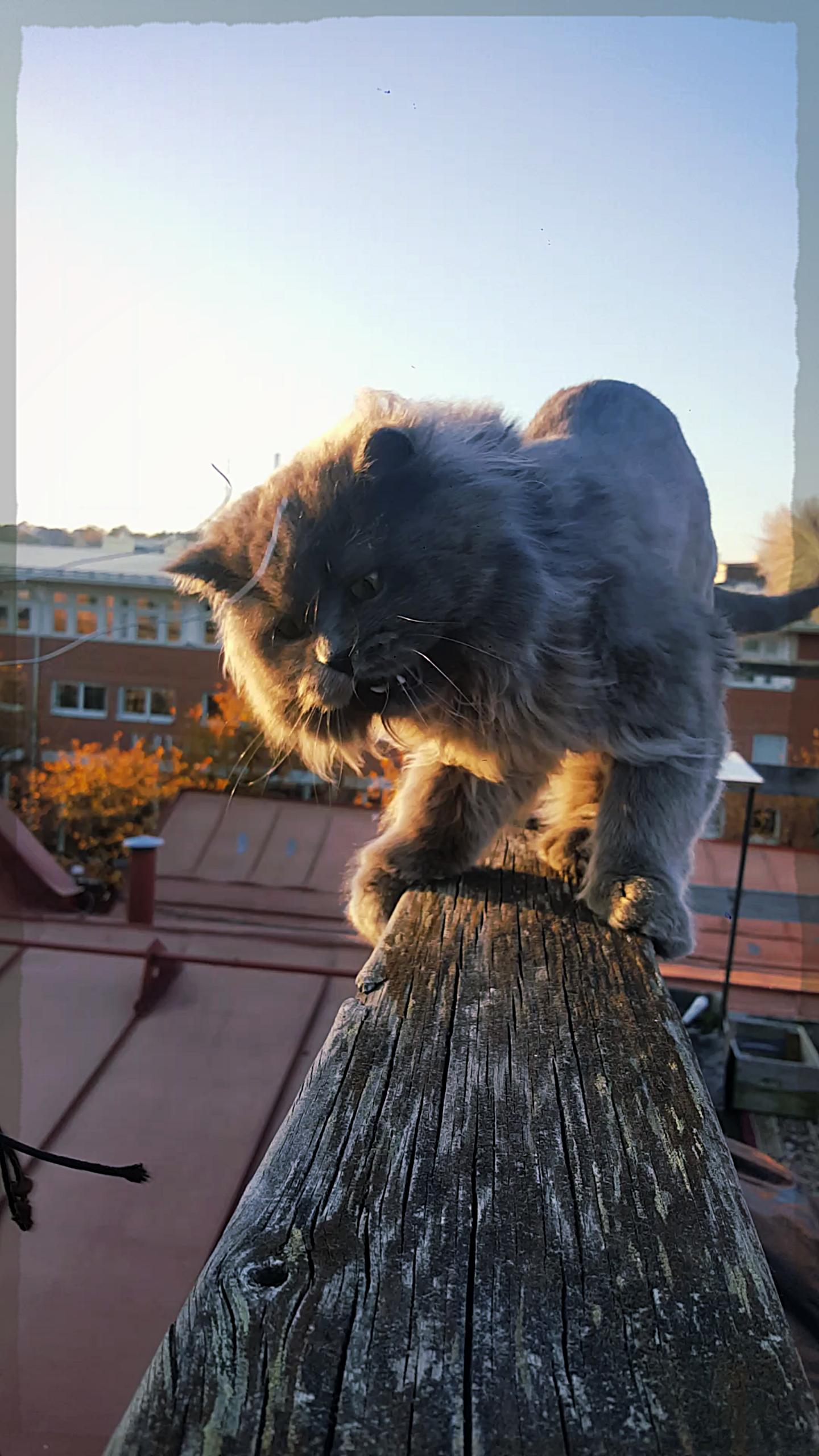 Ruphert - On The Rooftop Terrace