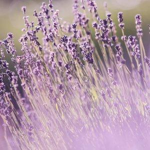 aromatherapy-aromatic-beautiful-flowers-286755 (1).jpg