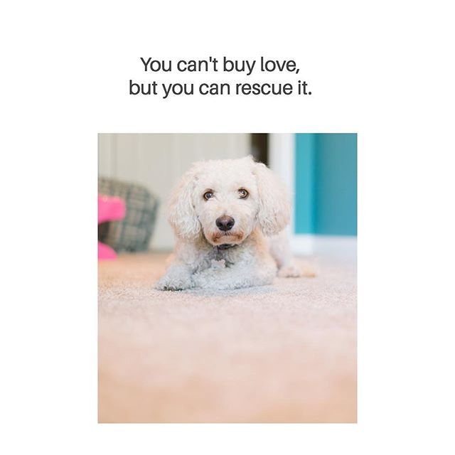 Whether it's a lick on the cheek or running to the door to greet you, dogs show us their ability to love unconditionally. ❤️#fureverheroes .  #dogsofinstagram #rescuedogs #rescuepups #rescuedogsofinstagram #doglife #adoptdontshop