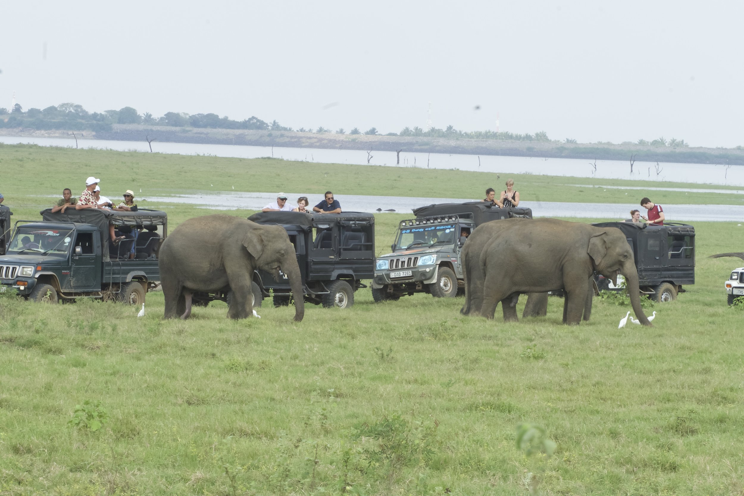Services - We provide the logistical, translator, and expert support necessary to complete projects in a timely and economical manner. We are always on the front lines and are devoted to our elephants. We support tour companies thru our sister organization GeoWandering.com.