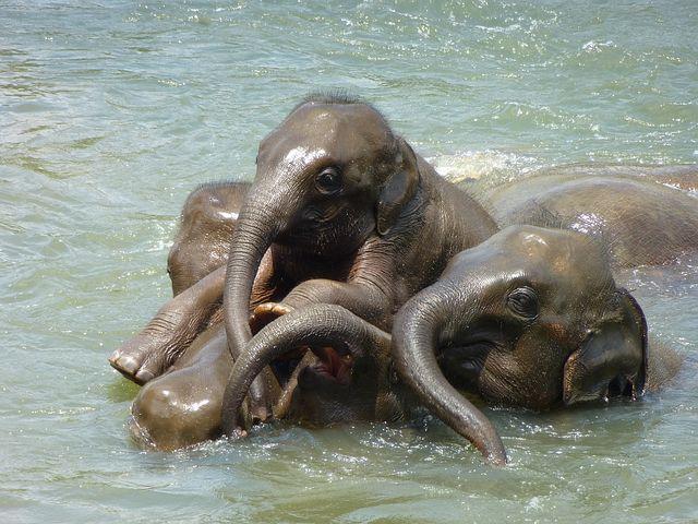 baby-elephant-256657__480.jpg