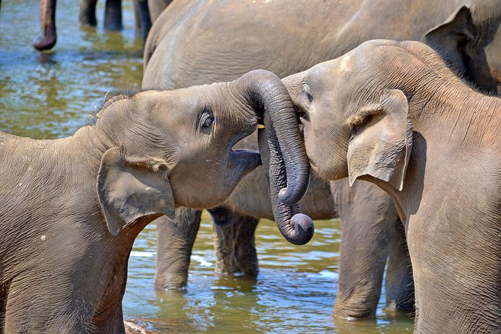 young-elephants-264711__480.jpg