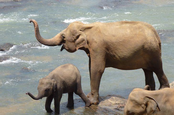 elephant-2419945__480.jpg